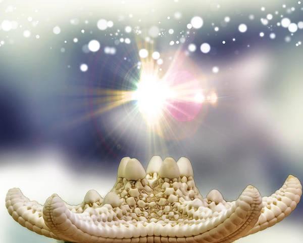 Fantasy Poster featuring the photograph Seashell Splendor by Bill Tiepelman