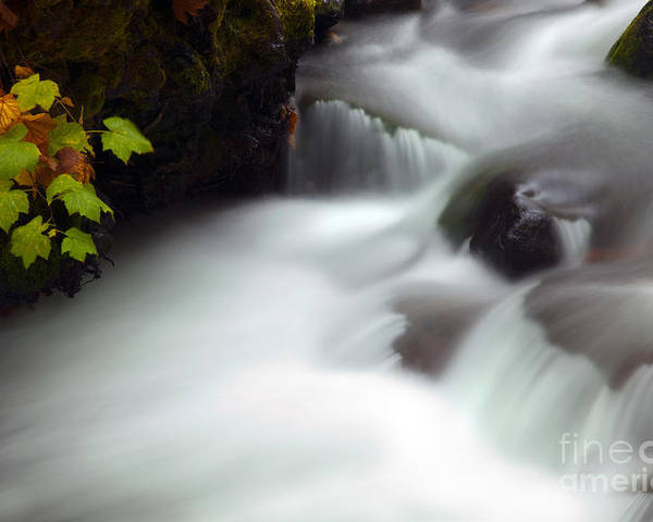 Autumn Poster featuring the photograph Seasons Rush By by Mike Dawson