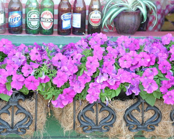 Floral Poster featuring the photograph Seven Bottles Of Beer On The Wall by Jan Amiss Photography