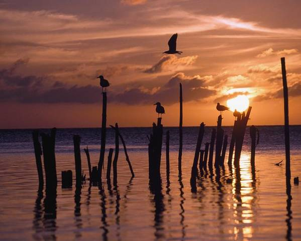 Photography Poster featuring the photograph Silhouette Of Seagulls On Posts In Sea by Axiom Photographic