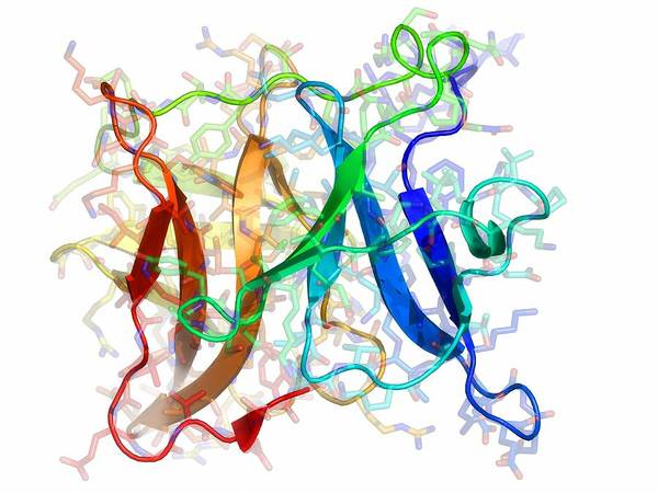 Artwork Poster featuring the photograph Sindbis Virus Capsid Protein by Laguna Design