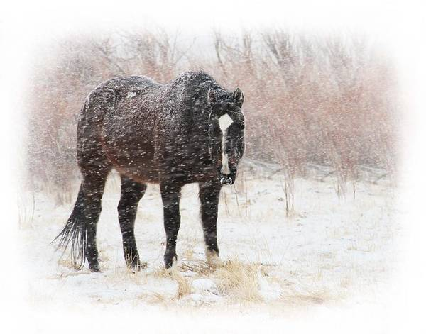 Horse Poster featuring the photograph Snow Horse by Megan Chambers