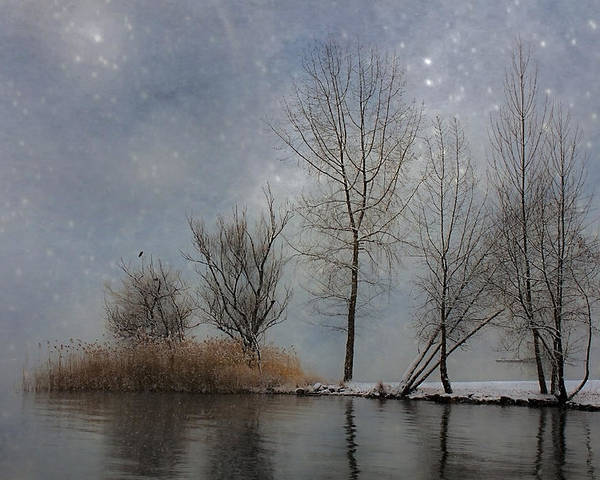 Winter Poster featuring the photograph Snowfall by Joana Kruse