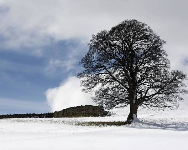 Day Poster featuring the photograph Snowy Field And Tree by John Short