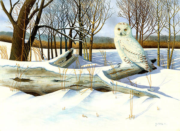 Owls.snow Scenes Poster featuring the painting Snowy Owl and Mouse by Bill Gehring