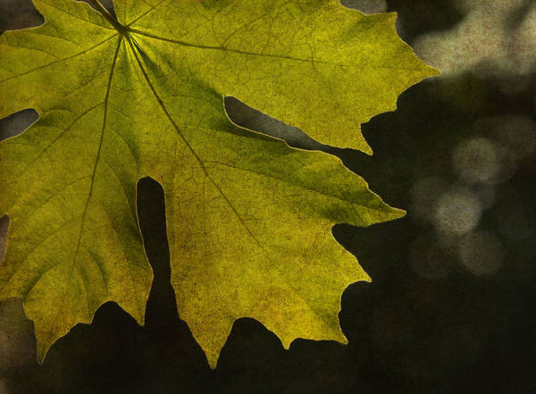 Autumn Poster featuring the photograph So It Begins by Rebecca Cozart