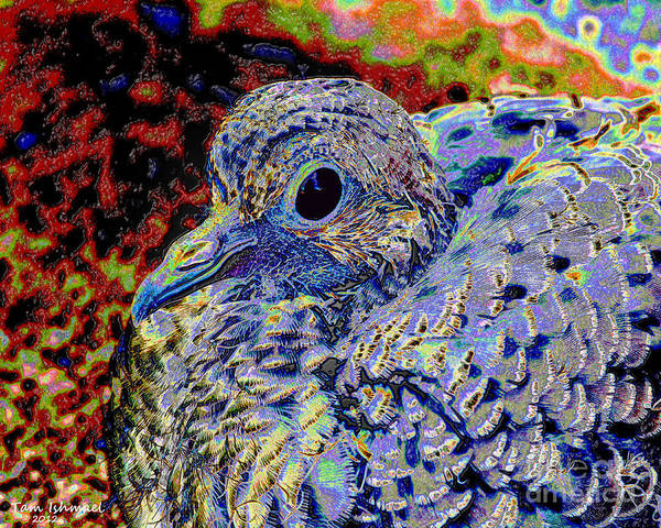 Dove Poster featuring the mixed media Solar Dove by Tammy Ishmael - Eizman