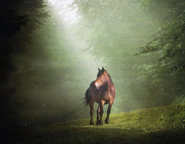 Horizontal Poster featuring the photograph Solitary Horse by Christiana Stawski