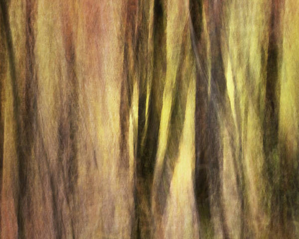 Kinetic Photography Poster featuring the photograph Sourwoods In Autumn Abstract by Rob Travis