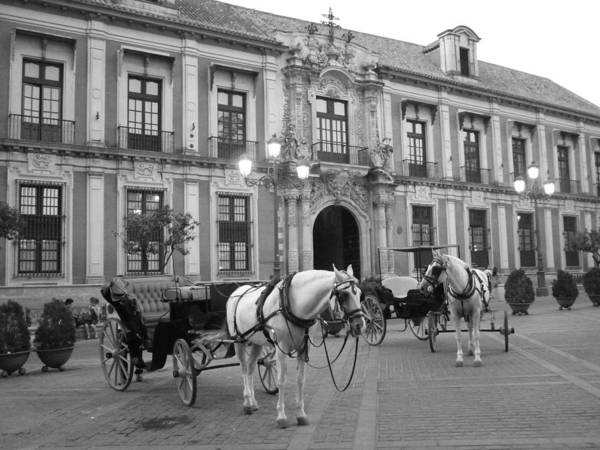 Horse Cart Black And White Spain Poster featuring the photograph Spain by Matt Wilton