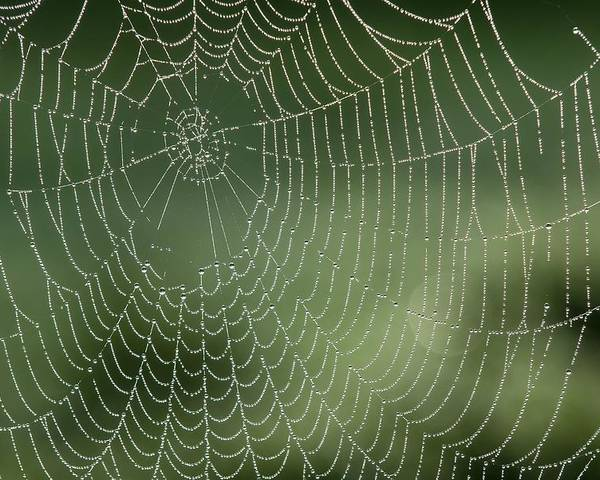 Web Poster featuring the photograph Spider Web by Adrian Bicker