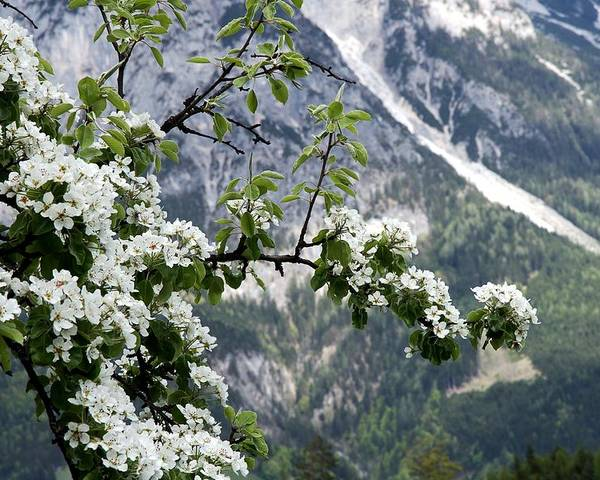 Horizontal Poster featuring the photograph Spring In Alps by Sola Deo Gloria