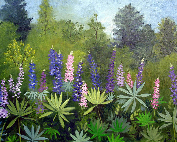 Maine Poster featuring the painting Spring Lupines by Laura Tasheiko