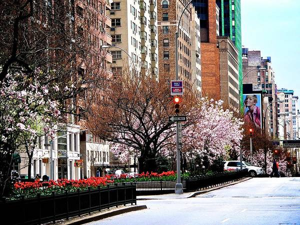 New York City Poster featuring the photograph Springtime On Park Avenue by Eric Tressler