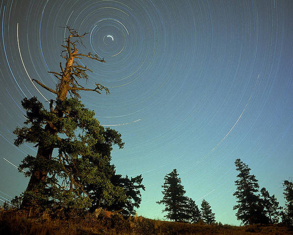 Circle Poster featuring the photograph Star Trails, North Star And Old Douglas by David Nunuk