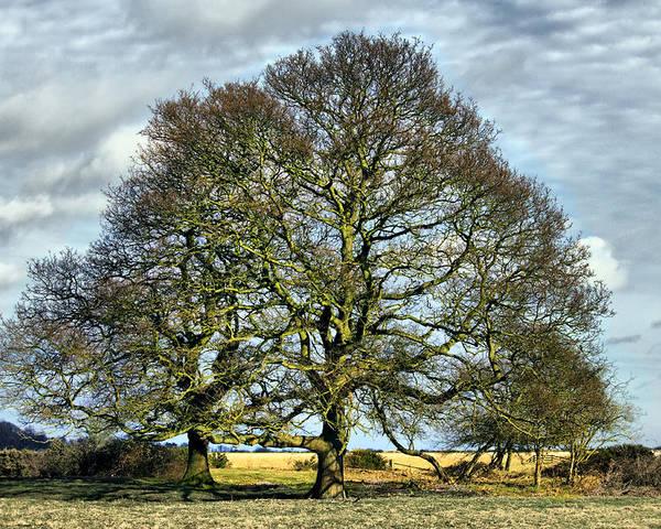 Suffolk Poster featuring the photograph Suffolk Winter Landscape by Darren Burroughs