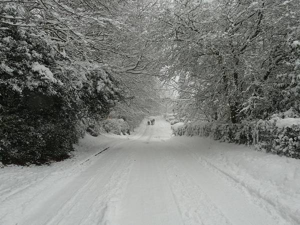 Christmas Cards Poster featuring the photograph Sugar Road IIi by Rdr Creative