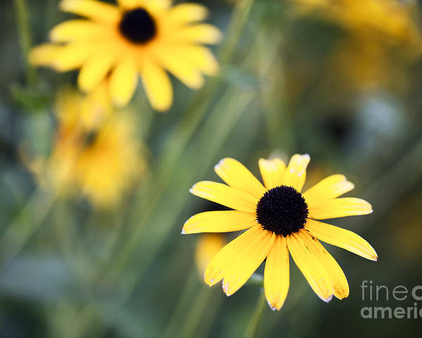 Flower Poster featuring the photograph Summer Memories by Leslie Leda