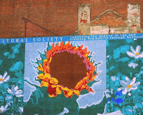 Sunflower Poster featuring the photograph Sunflower In Phili by JAMART Photography