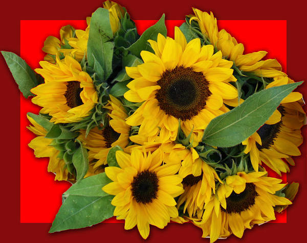 Flowers Poster featuring the photograph Sunflowers by Edite Azevedo