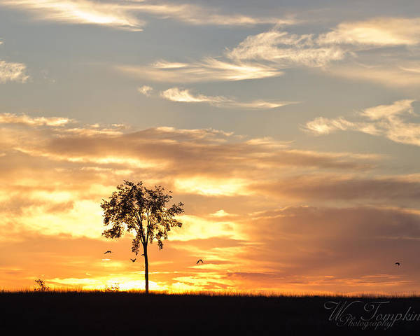 Sunrise Poster featuring the photograph Sunrise Tree by Wendy Tompkins