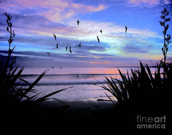 Sunset Poster featuring the photograph Sunset Down Under by Karen Lewis