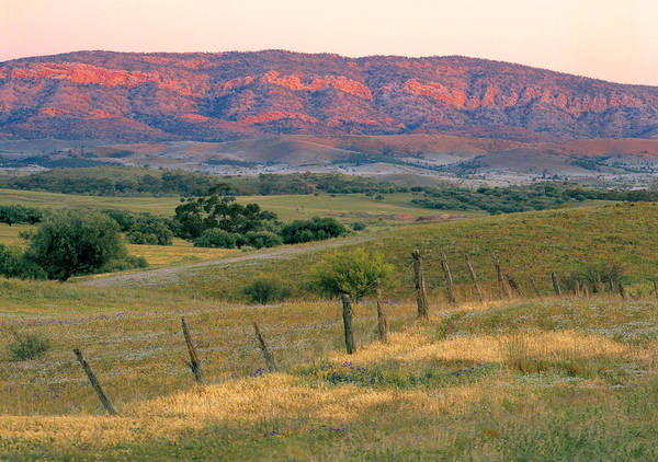 Horizontal Poster featuring the photograph Sunset Glow On Flinders Ranges In Moralana Drive, South Australia by Peter Walton Photography