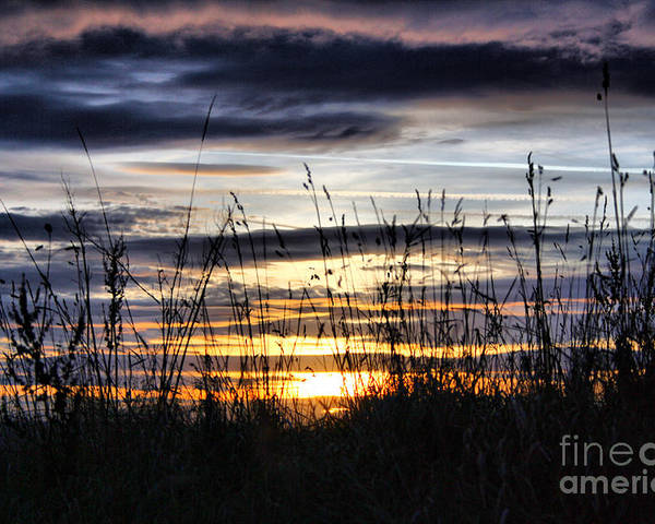 Sunset Poster featuring the photograph Sunset Grasses by Sandra Cockayne