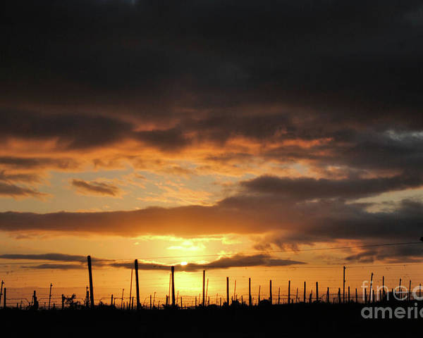 Vineyards Poster featuring the photograph Sunset On The Vineyards by Nancy Chambers