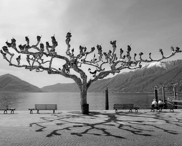Travel Europe Poster featuring the photograph sycamore trees in Ascona - Ticino by Joana Kruse