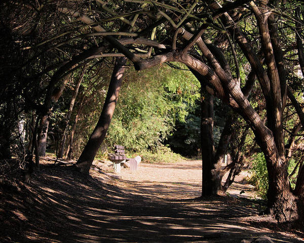 Tree Poster featuring the photograph Tangled Arch by Judith Szantyr