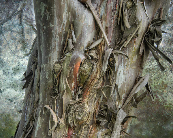 Tree Poster featuring the photograph Tattered Tree by Lisa Moore