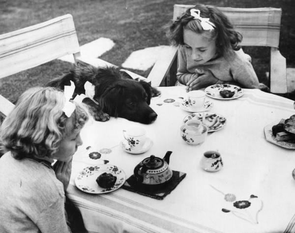 8-9 Years Poster featuring the photograph Tea Party by Fox Photos