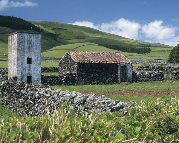 Farm Poster featuring the photograph Terceira by Guy Whiteley