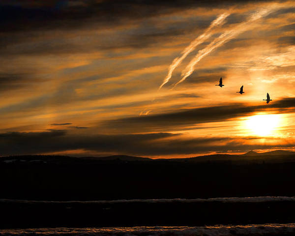 Geese Poster featuring the photograph The Last Sunset by Gary Smith