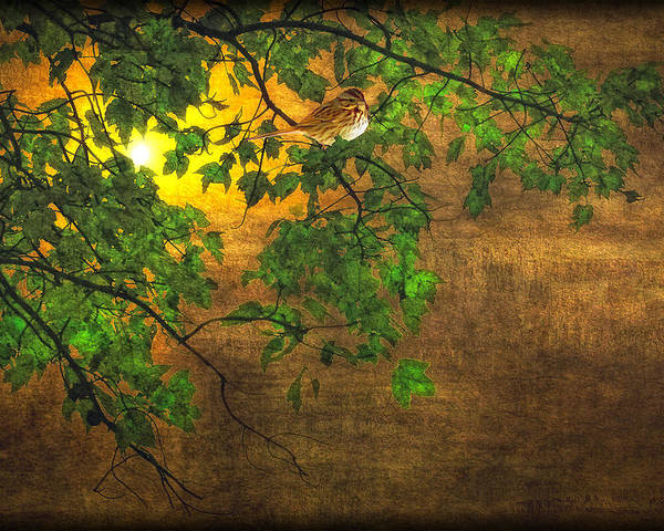 Bird Poster featuring the photograph The Little Sparrow In The Tree by Tom York Images