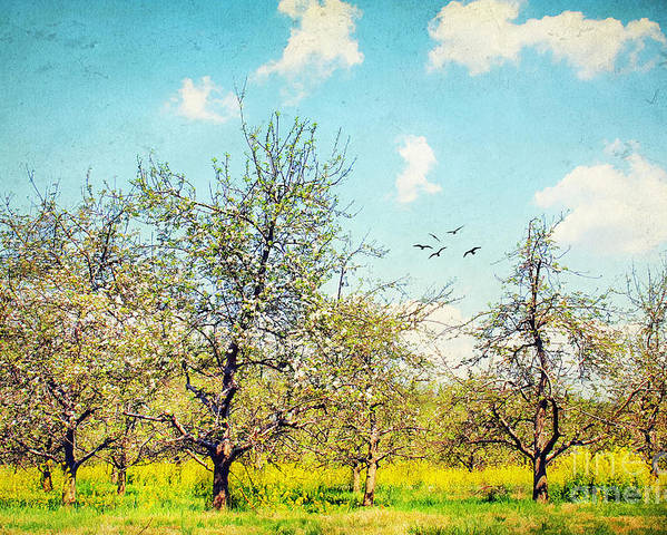 Apple Poster featuring the photograph The Orchard by Darren Fisher
