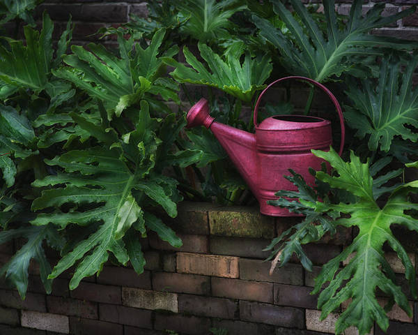 Hattiesburg Poster featuring the photograph The Watering Can by Brenda Bryant