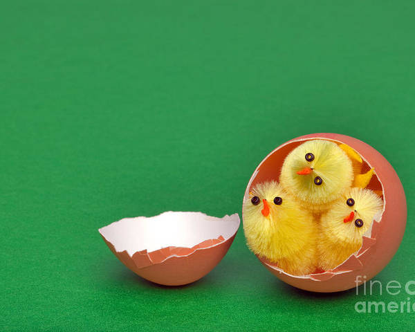Easter Poster featuring the photograph Three Easter Chicks In An Egg Shell by Richard Thomas