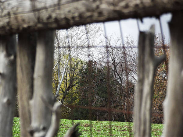 Landscape Poster featuring the photograph Through The Eye Of The Stick Wood Fence by Robin Cox