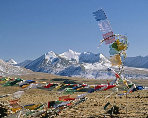 Himalaya Poster featuring the photograph Tibetan Buddhist Prayer Flags Atop Pass by Gordon Wiltsie