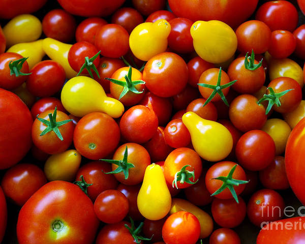 Abundance Poster featuring the photograph Tomatoes Background by Carlos Caetano