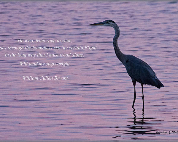 Quotes Poster featuring the photograph Treading Alone  Great Blue Heron by Jonathan Whichard