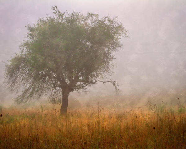 Barn Poster featuring the photograph Tree In Fog by Debra and Dave Vanderlaan
