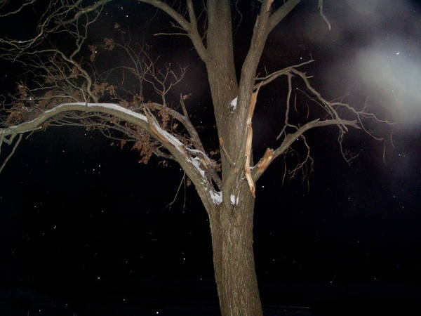 Night Poster featuring the photograph Tree On A Dark Snowy Night by Victoria Sheldon