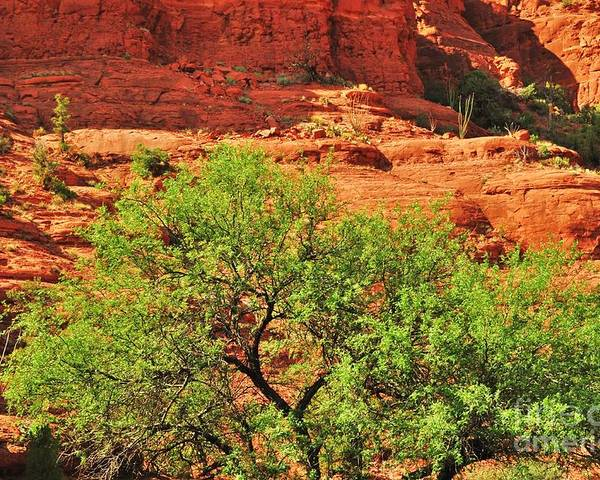 Sedona Poster featuring the photograph Tree Set Against Red Cliffs by George Sylvia