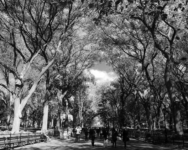 Black And White Poster featuring the photograph Trees On The Mall In Central Park In Black And White by Rob Hans