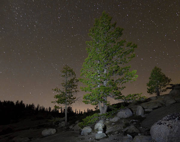 Horizontal Poster featuring the photograph Trees Under Stars by Sean Duan