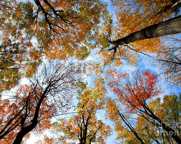 Fall Poster featuring the photograph Treetops by Elena Elisseeva