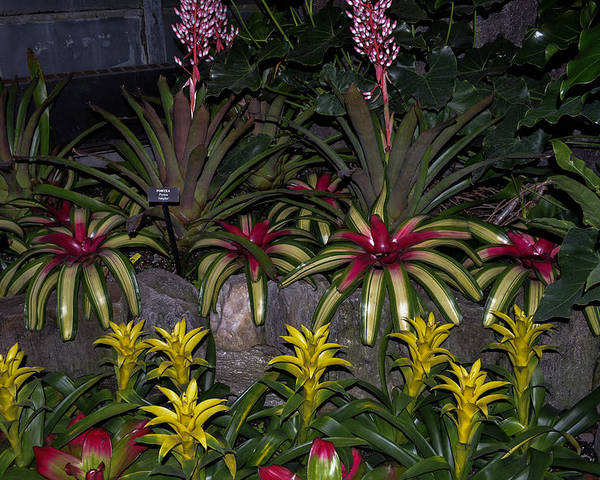 Flowers Poster featuring the photograph Tropical 1 by Wanda J King